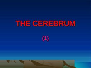 THE CEREBRUM.ppt