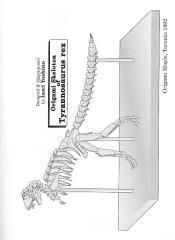 Issei Yoshino - Origami Skeleton of Tyrannosarus rex by origamiml.blogspot.com.pdf